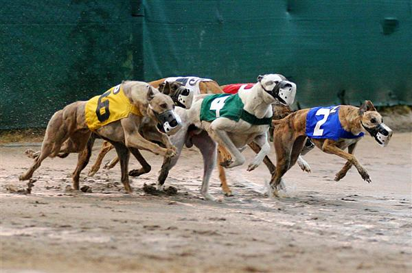 Racing | All About Greyhounds